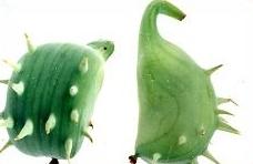 explodierende gurken